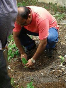 Tree Plantation by Shri. Pramod Gawande, Principal.